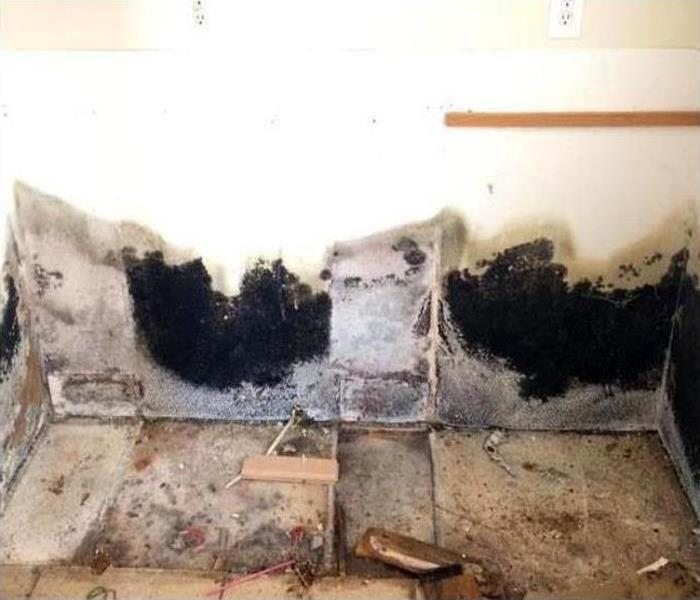 Mold Remediation In Shreveport Before