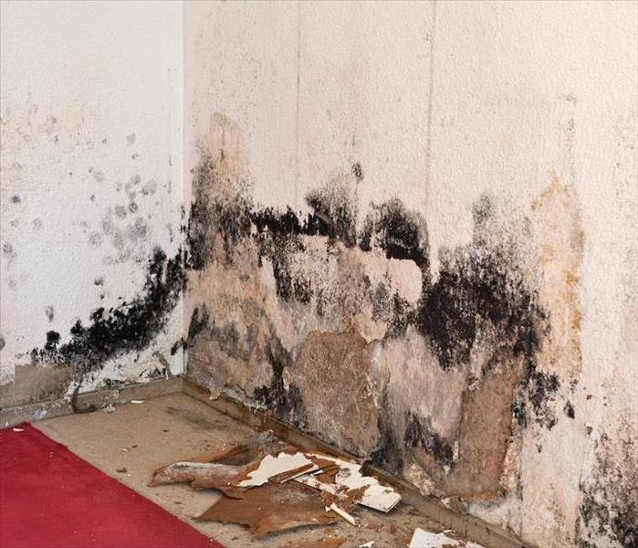 Mold Remediation How Flood Damages Can Lead to Mold in Your Shreveport Home