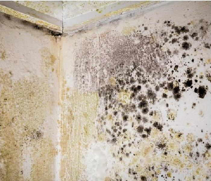 mold damage on walls and ceiling